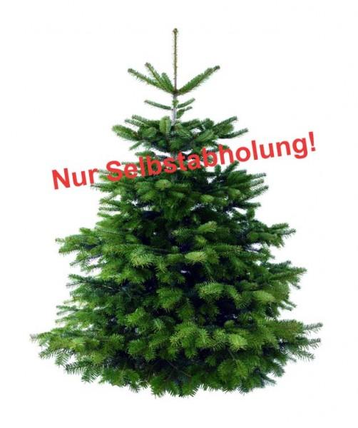 frisch geschlagen 225cm beste Qualität: 4-Sterne Weihnachtsbaum Nordmanntanne